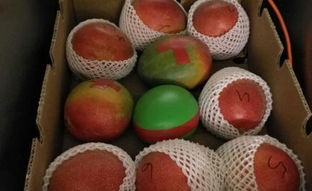 Nakliye sırasında diğer (gerçek) mangolar arasındaki mango sensörü.