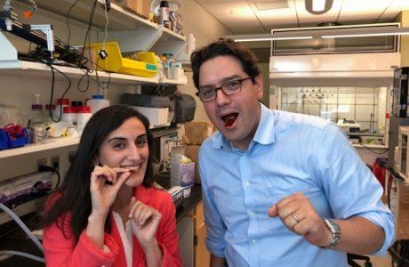 Yenilebilir Sensör Bağırsak Hastalıklarının Teşhisinde Yardımcı Olabilir